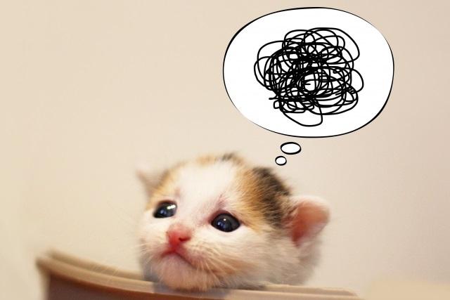 困っている猫